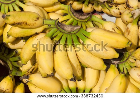 Bunch of Bananas of a South Indian variety called Yelakki