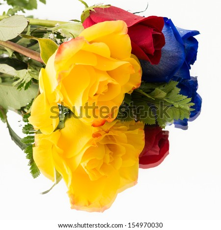 Bunch of beautiful roses for a special occasion. Yellow,red an blue roses isolated in a white background