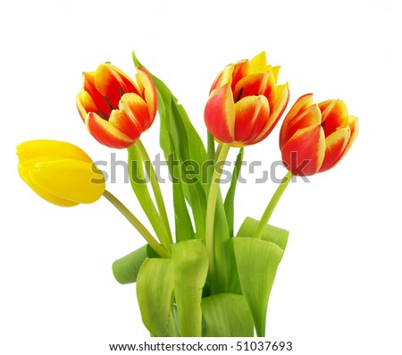 Bunch of beautiful spring tulip flowers
