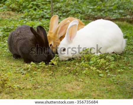 Bunch of black, white and red rabbits eating grass in the spring easter time.  - stock photo