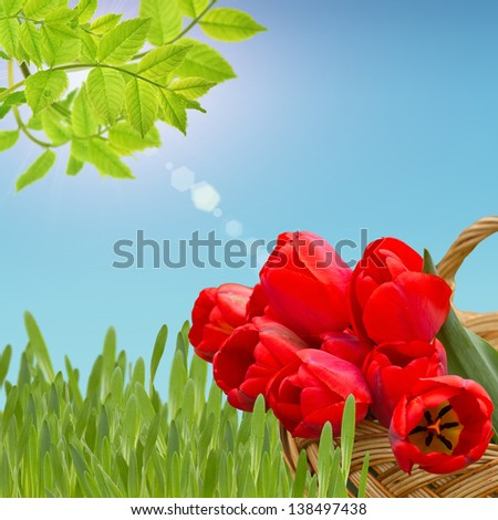 Bunch of bright red tulips on garden background. Summer background. - stock photo