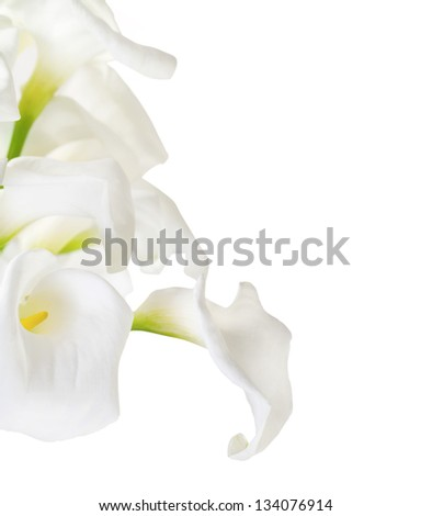 Bunch of Cala Lilies in high key isolated on white - stock photo