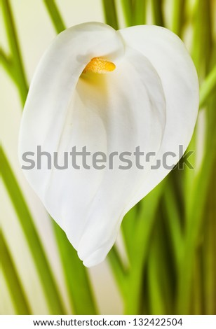 Bunch of Cala Lilies in retro style - stock photo