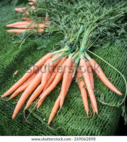 Bunch of Carrots - stock photo