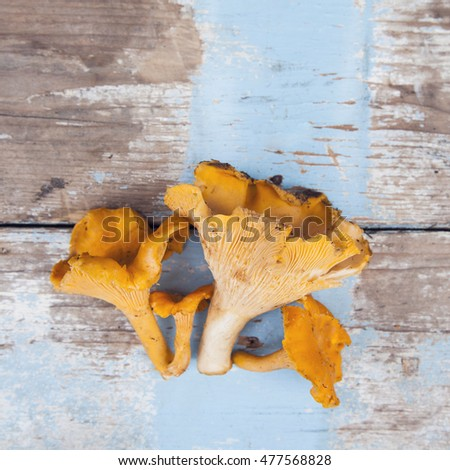 bunch of chanterelles mushrooms on wooden surface