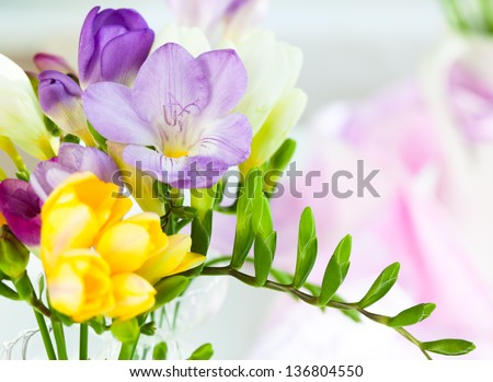 bunch of colorful freesia flowers - stock photo