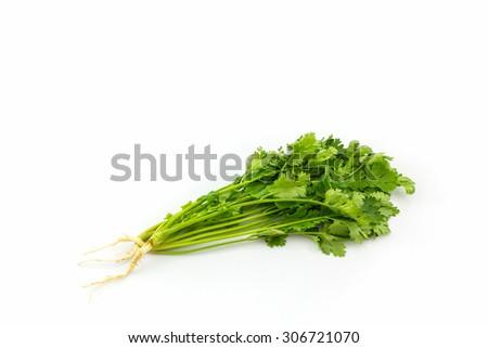 Bunch of coriander on white background. - stock photo