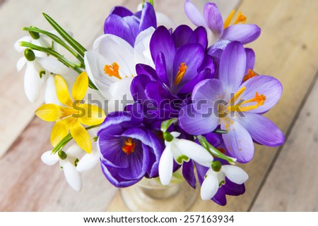 Bunch of Crocus and Snowdrops in a glass vase on the wooden table. - stock photo