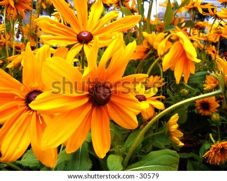 Bunch of Daisy - stock photo