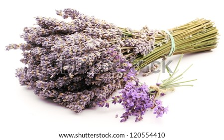 Bunch of dried and fresh lavender on a white background. - stock photo