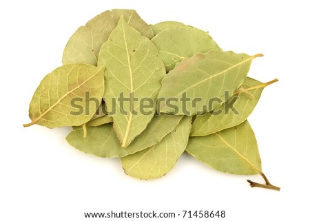 bunch of dried bay leaves on a white background