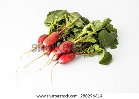 Bunch of ecological radishes from the ground on a white background  - stock photo
