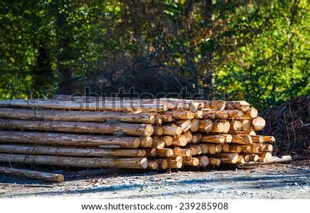 Bunch of felled tree - stock photo