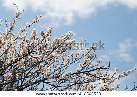 Bunch of flower branch reach into the air