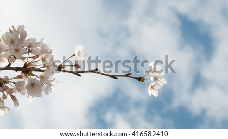 Bunch of flower on left side reach into the air