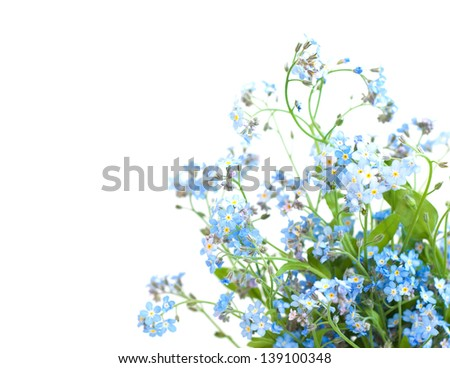 Bunch of forget-me-not flowers on a white background - stock photo