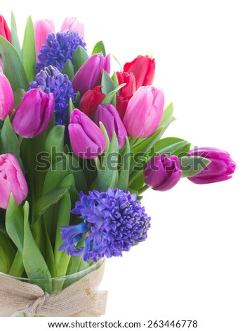 bunch of  fresh blue hyacinth and  tulips  close up  isolated on white background