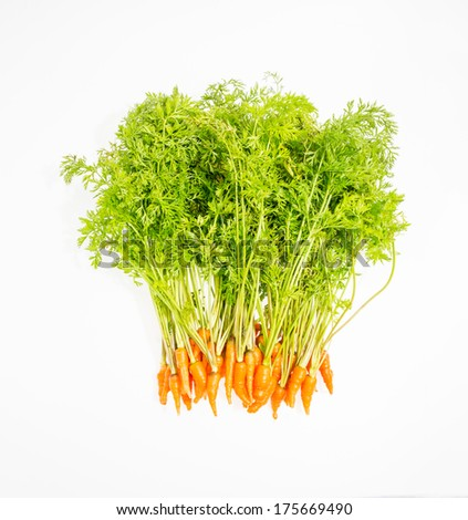 Bunch of fresh carrots with green tops. Isolated on a white. - stock photo