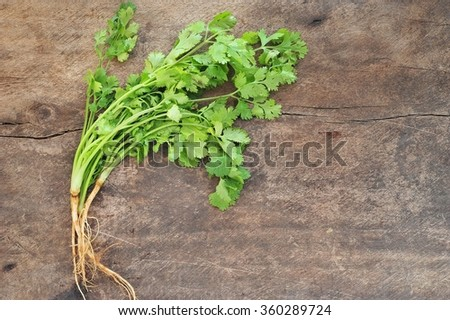 Bunch of fresh coriander on a wooden table.