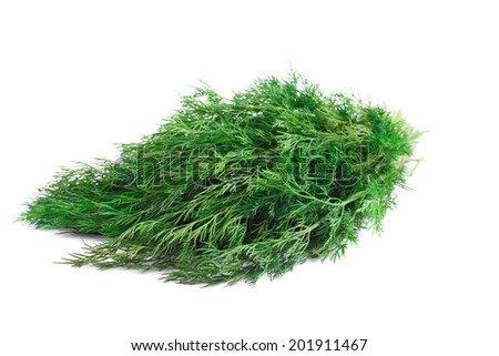 Bunch of fresh dill. Isolated on white background