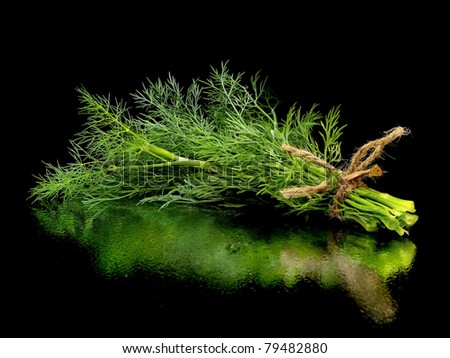 bunch of fresh dill on a black background with water drops - stock photo