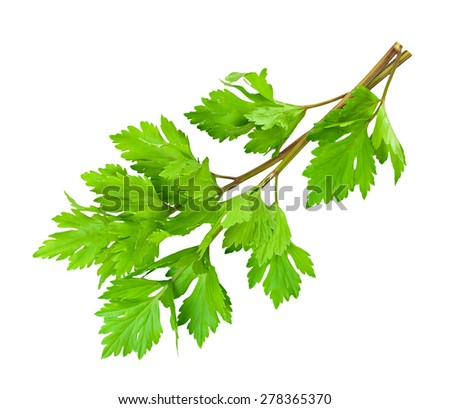 Bunch of fresh green celery isolated on white. - stock photo