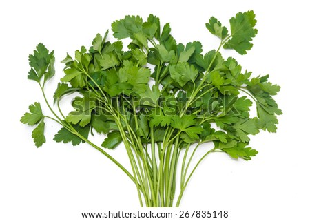 Bunch of fresh green parsley on a light background. Isolation. - stock photo