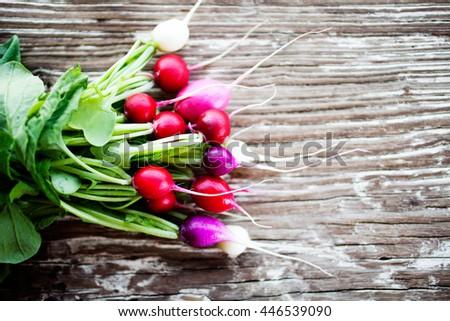 Bunch of fresh home grown radishes - stock photo