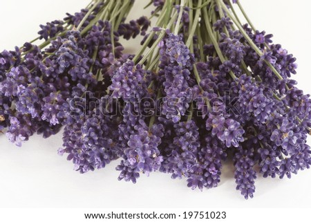 Bunch of fresh lavender on bright background