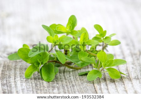 Bunch of fresh marjoram  - stock photo