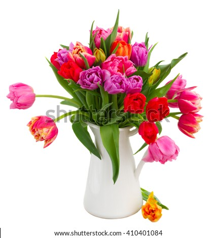 bunch of fresh pink, purple and red  tulips in pot isolated on white background - stock photo