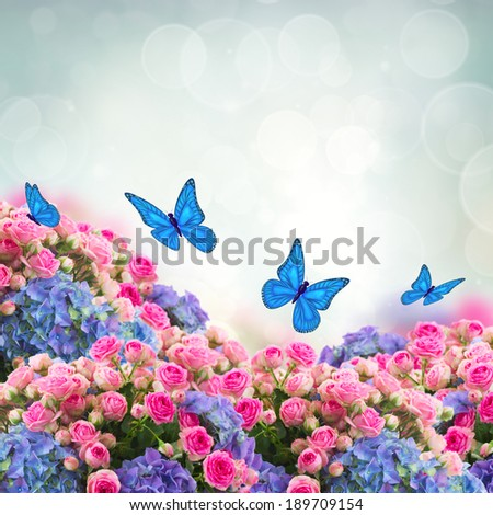 bunch  of fresh pink roses and blue hortenzia flowers  with butterflies on blue sky background - stock photo