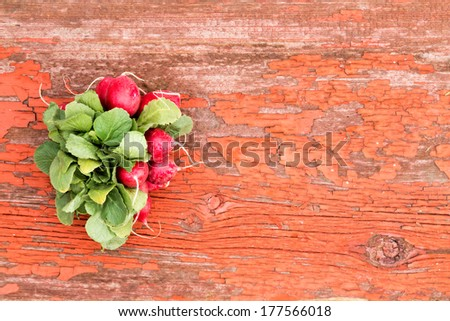 Bunch of fresh red crispy radishes with their edible leaves lying on a grungy rustic wooden board with cracked peeling paint and copyspace - stock photo