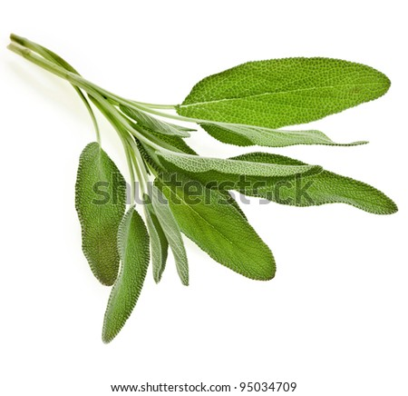 bunch of fresh sage isolated on white background