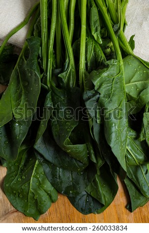 Bunch of fresh spinach just washed. - stock photo