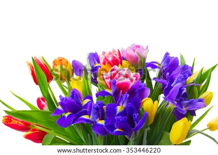 bunch of fresh spring tulips and  irises close up isolated on white background - stock photo