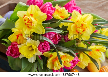 bunch of fresh spring yellow daffodils and tulips close up  - stock photo