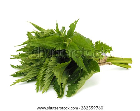 Bunch of fresh stinging nettle on a white background