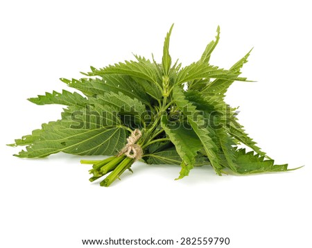 Bunch of fresh stinging nettle on a white background - stock photo