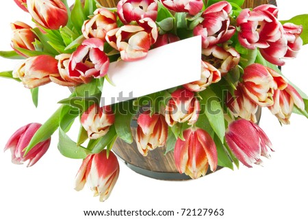 Bunch of fresh tulips with water drops on white background