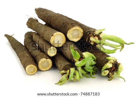 bunch of freshly harvested black salsify and some cut ones on a white background - stock photo