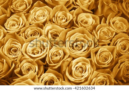 Bunch of gold colored rose flowers close-up as background. Filtered image.