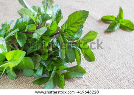 bunch of green mint on sacking - stock photo