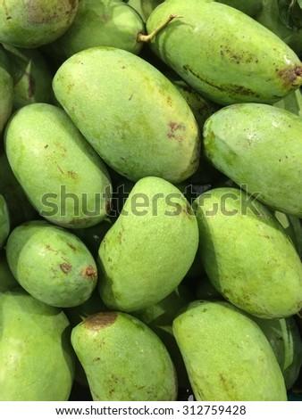 Bunch of green ripe mango on tree in garden. - stock photo