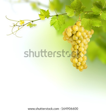 Bunch of green vine leaves and grape vine - stock photo