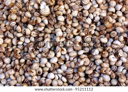 Bunch of Ground Snails Sold at Ballarò Market (Palermo, Sicily)