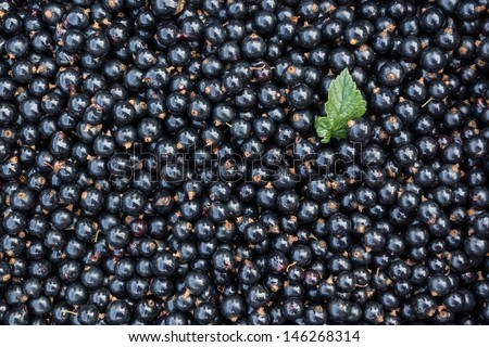 bunch of harvested black currants and a leaf