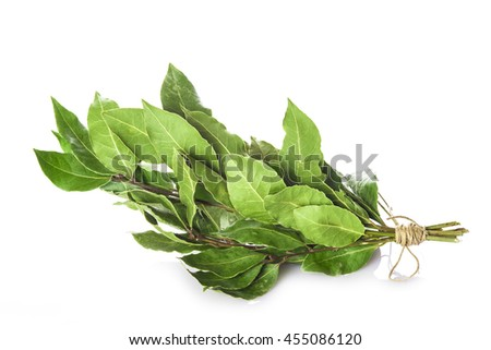Bunch of laurel branches with leaves dried isolated on a white background - stock photo