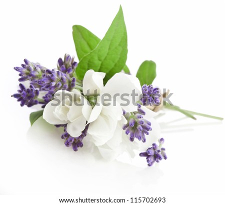 Bunch of lavender and jasmine flowers isolated on a white background