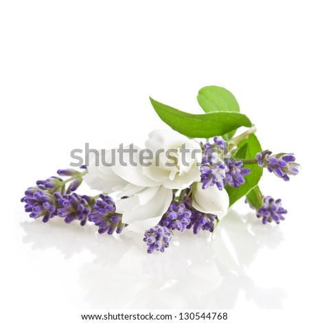 Bunch of lavender and jasmine flowers on a white background - stock photo